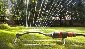 Even-odd watering rule