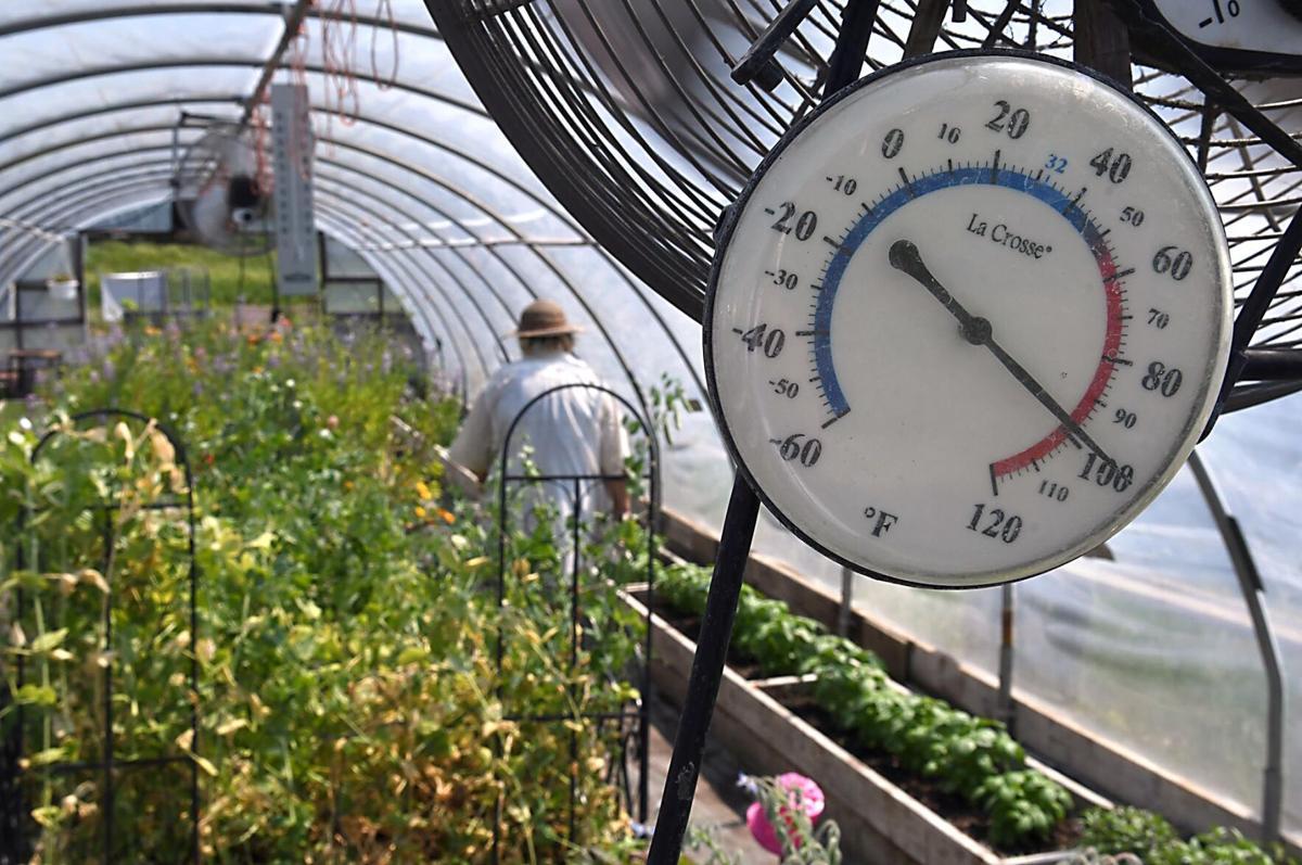 Gardening in the heat 2