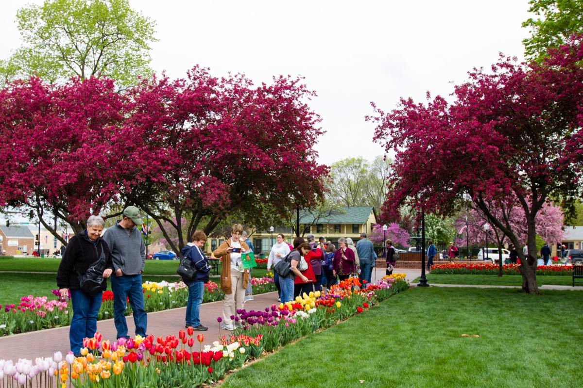 Spectators view tulip varieties at 84th annual Tulip Time festival