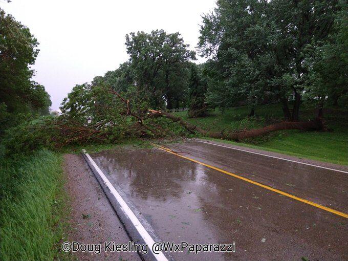 Tree blocking road near New Richland