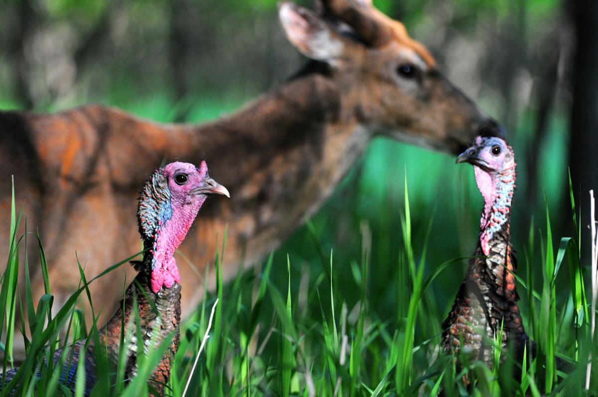 Morrison turkey hunt 1