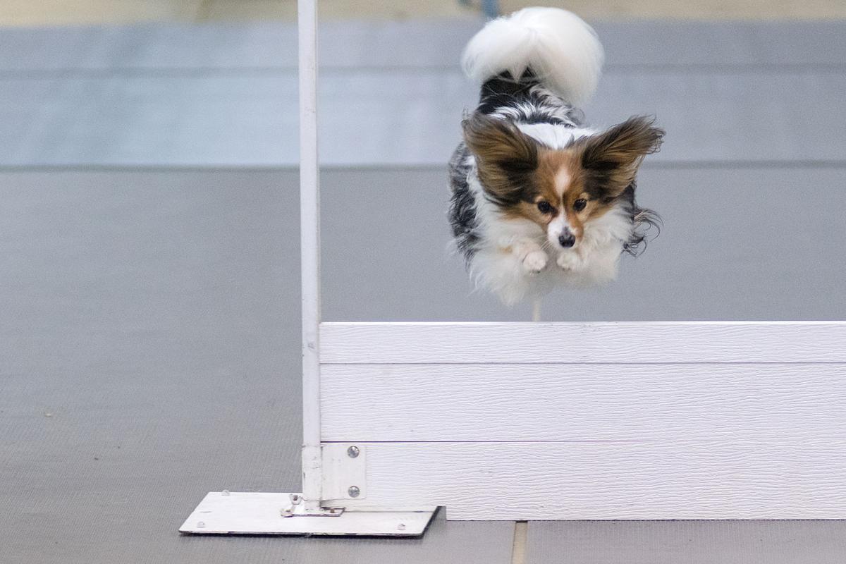 Dog Show Main