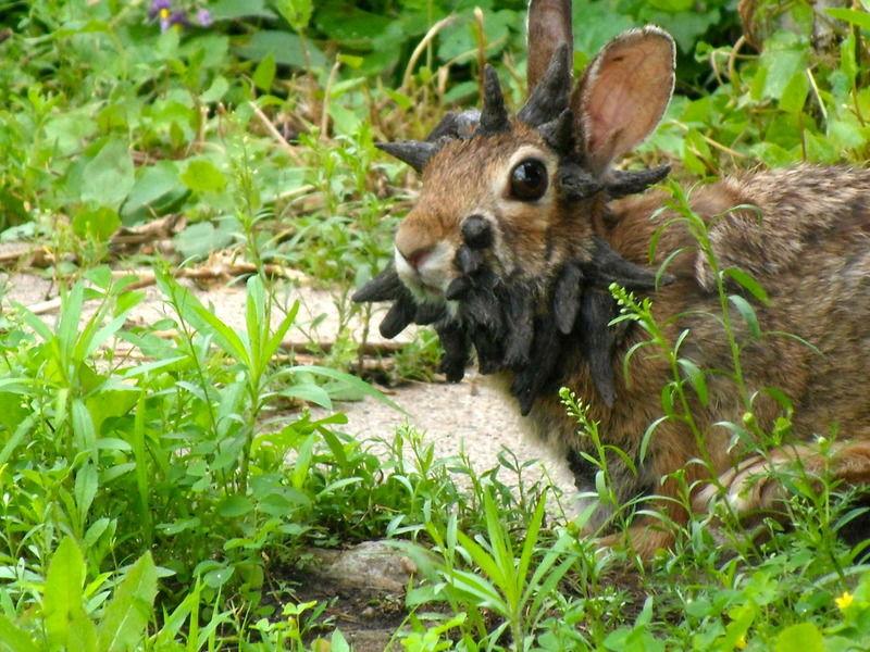 mfp crazy bunny