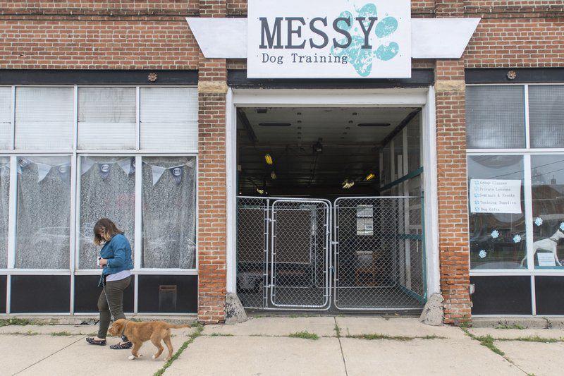 Messy Dog Training Mankato