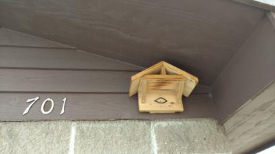 Swallow nest house