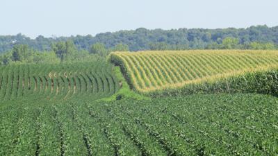 crops horizontal