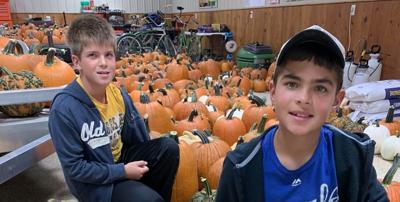 Pumpkin varieties