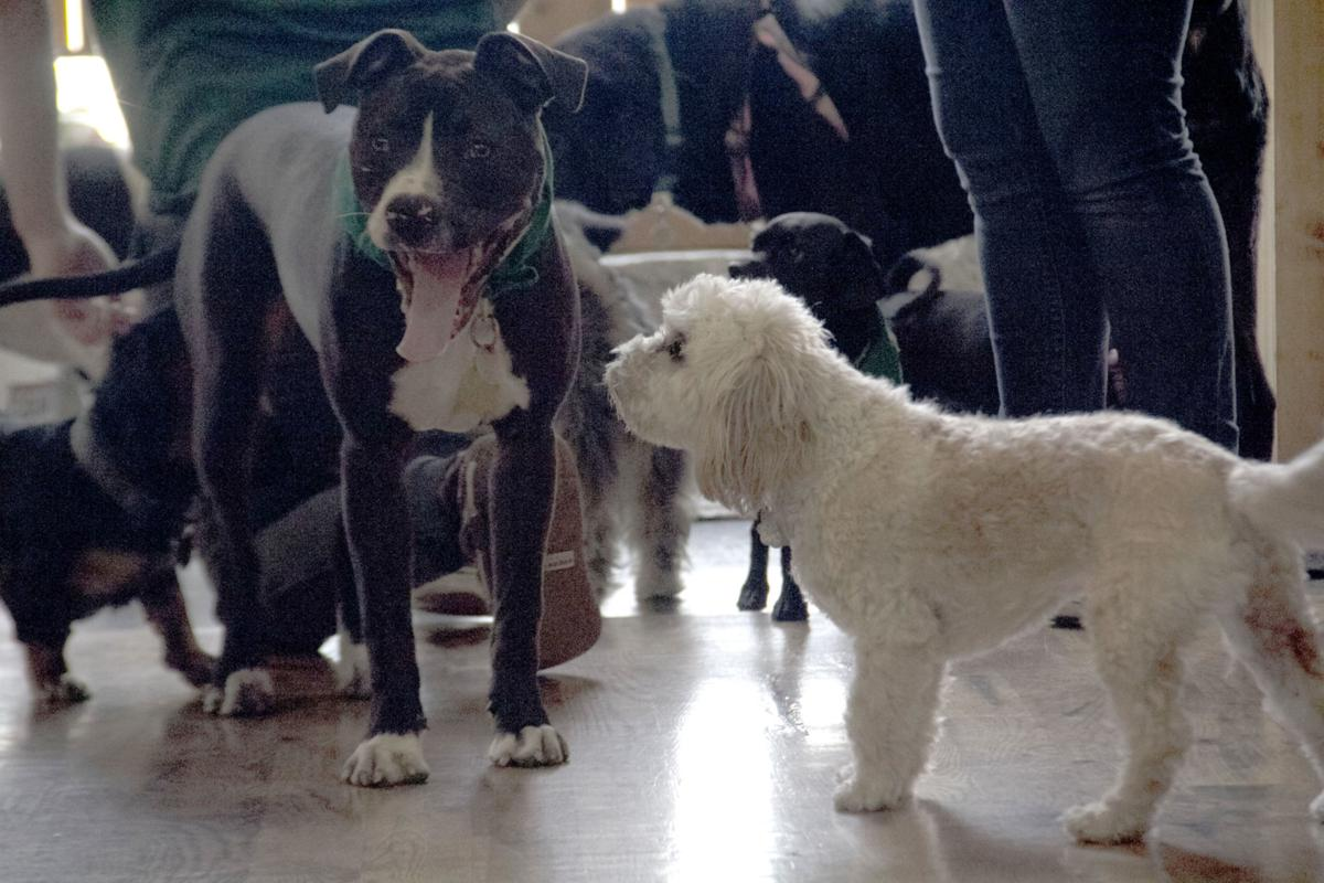 Dogs, owners socialize during Paws at The Pub | Life