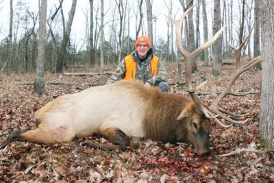Guilkey elk