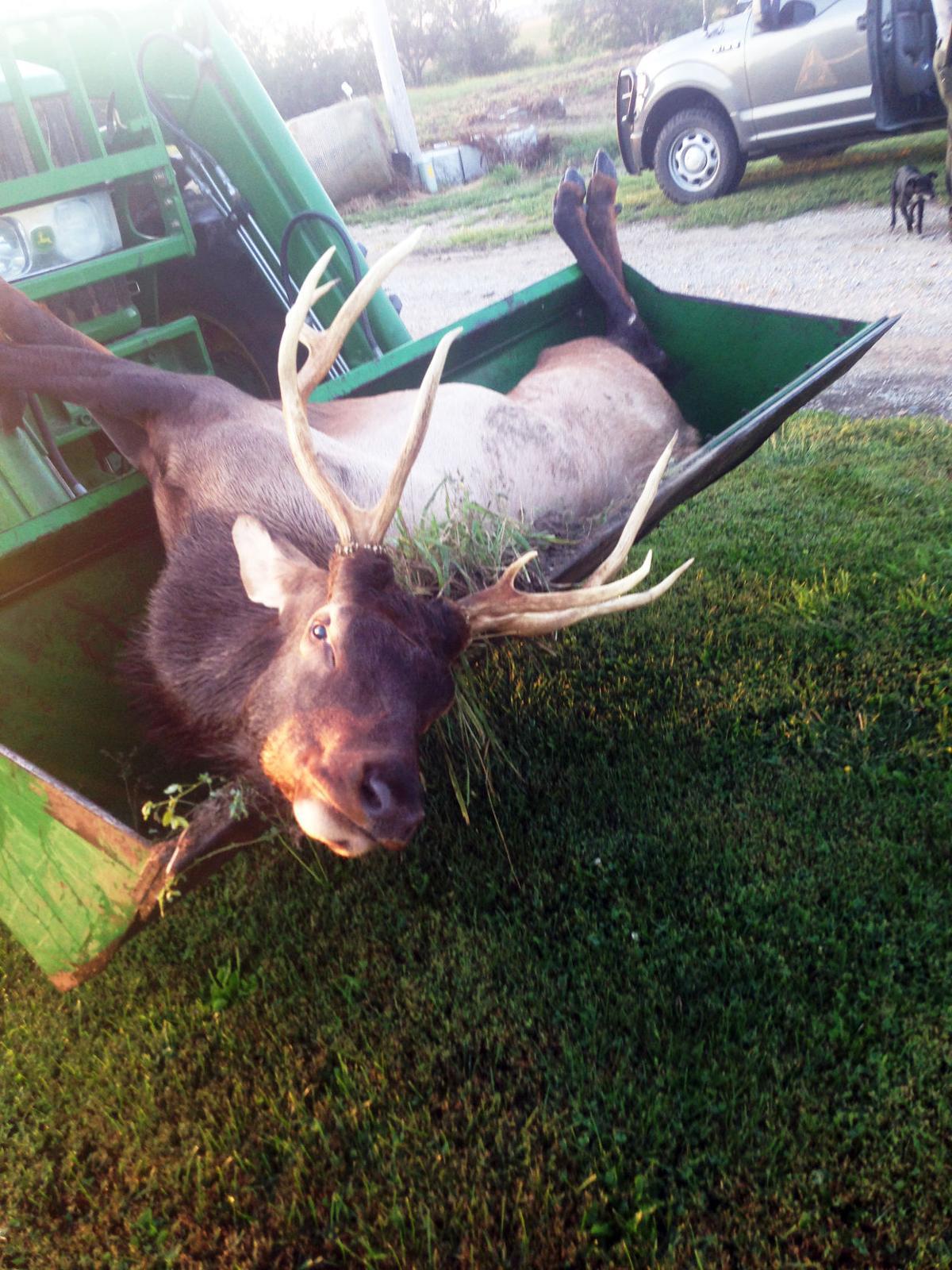 9-19-19 Elk1.jpg