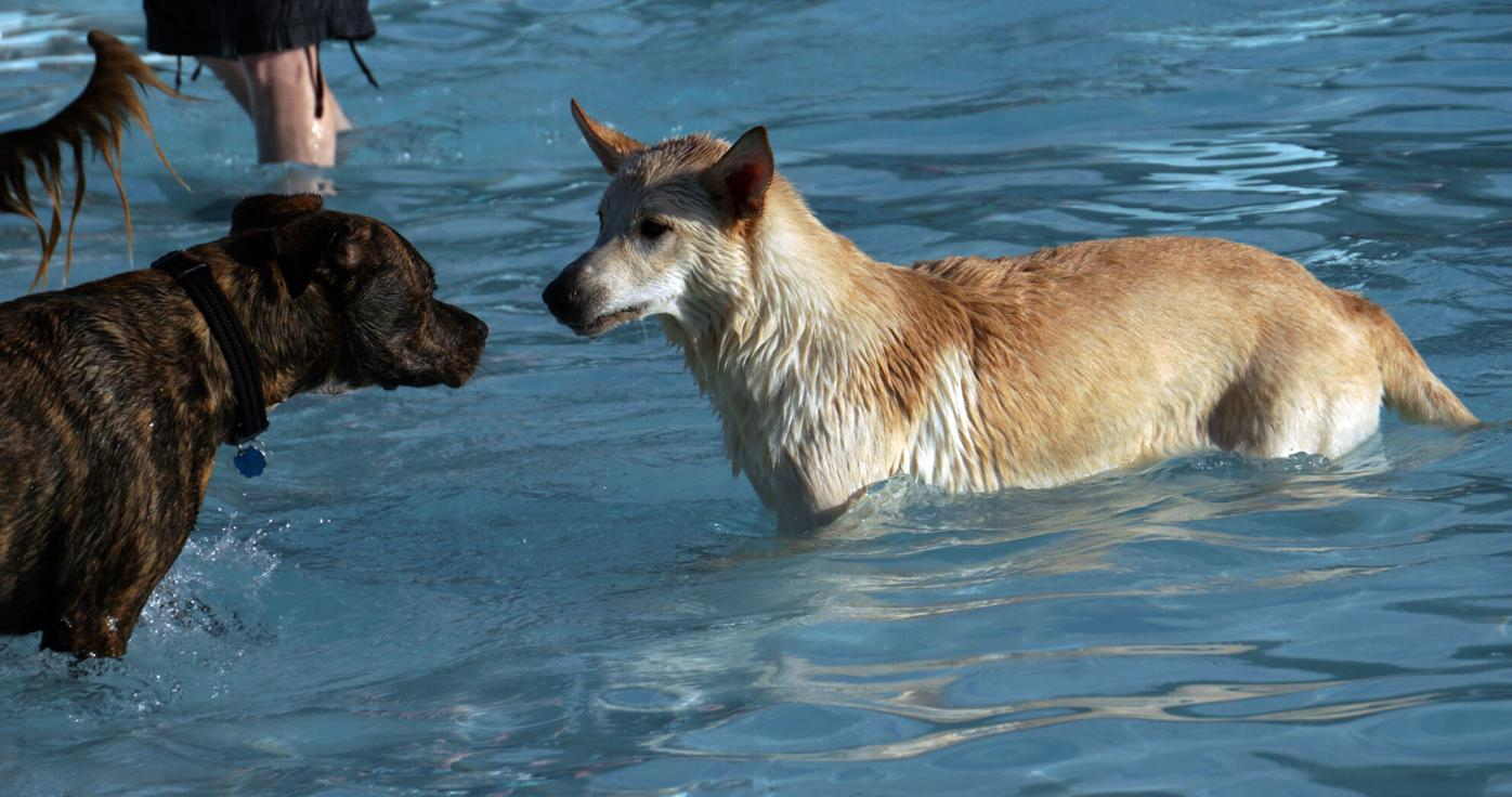 2021-08-19 Dogs.jpg