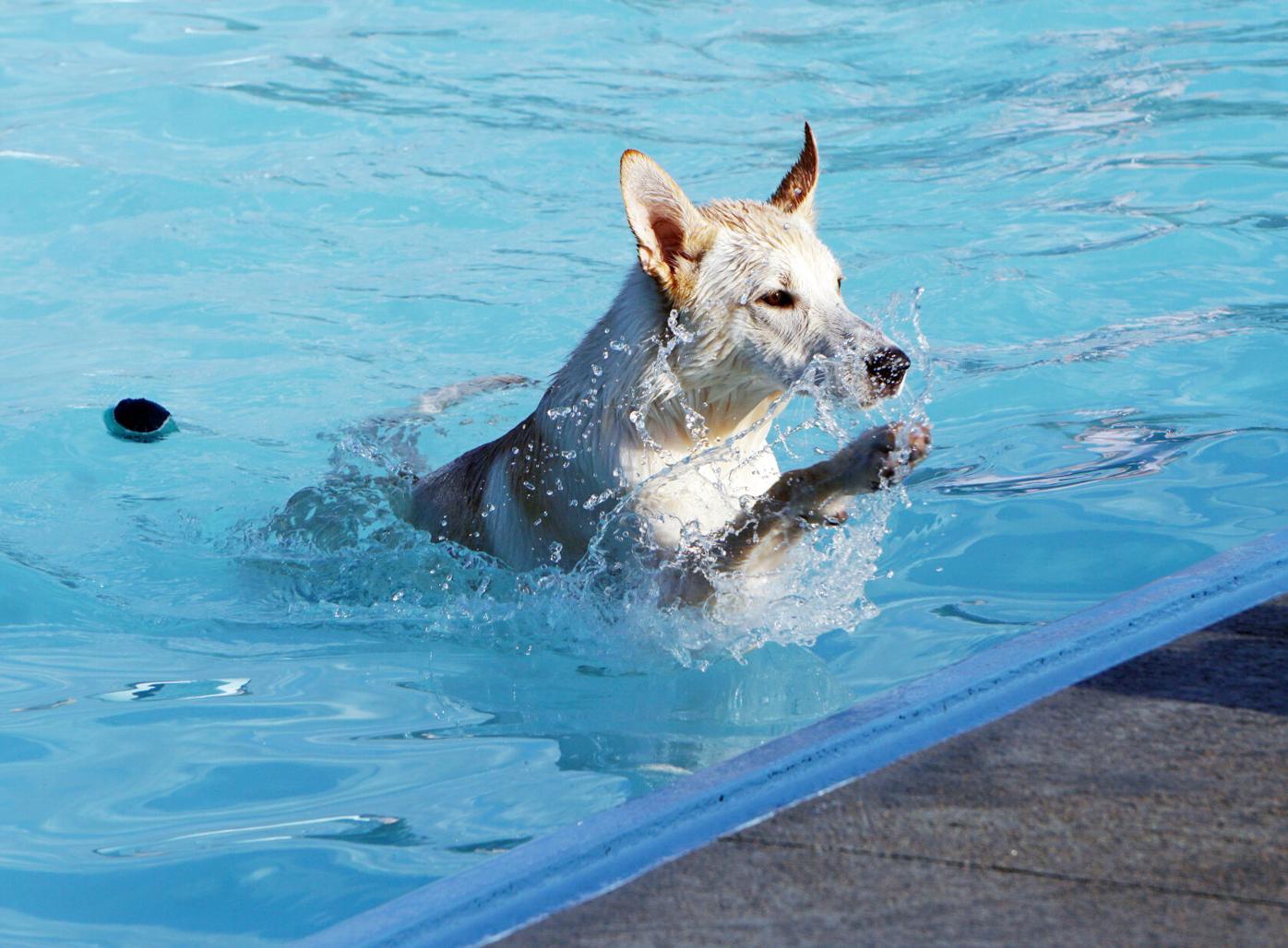 2021-08-19 Dogs6.jpg