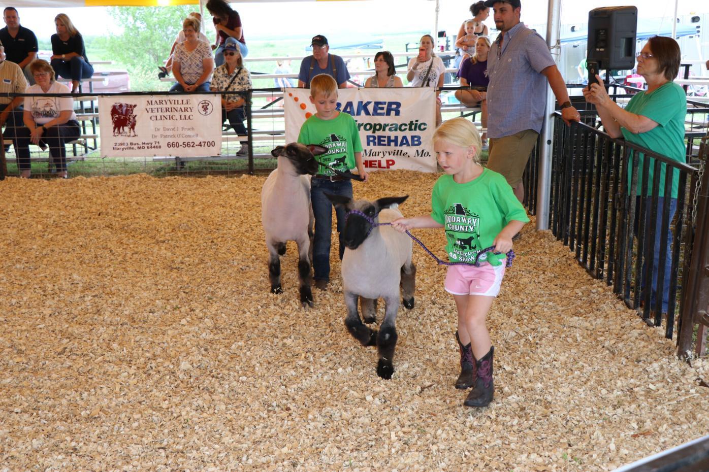 7-22-21 Sheep Show 1.jpg