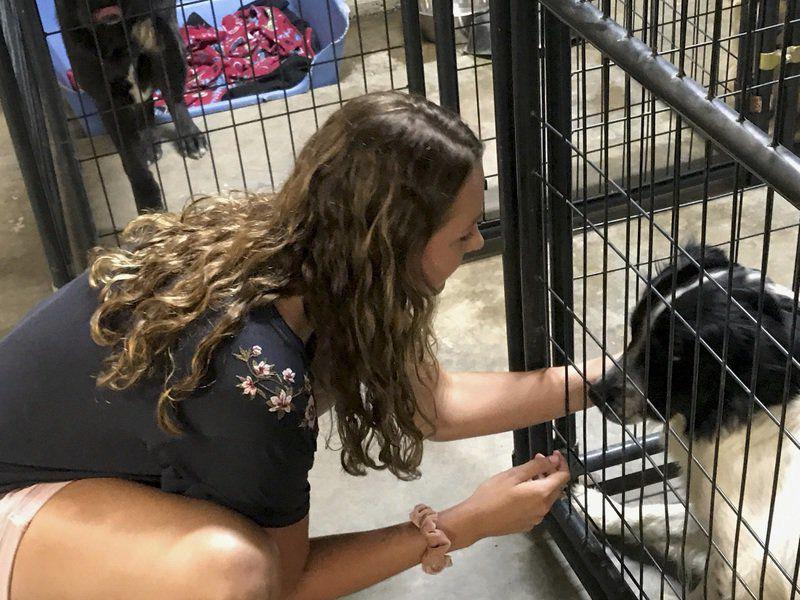 Hartshorne's Hackler volunteers at animal shelter