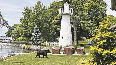Conneaut Lake bear