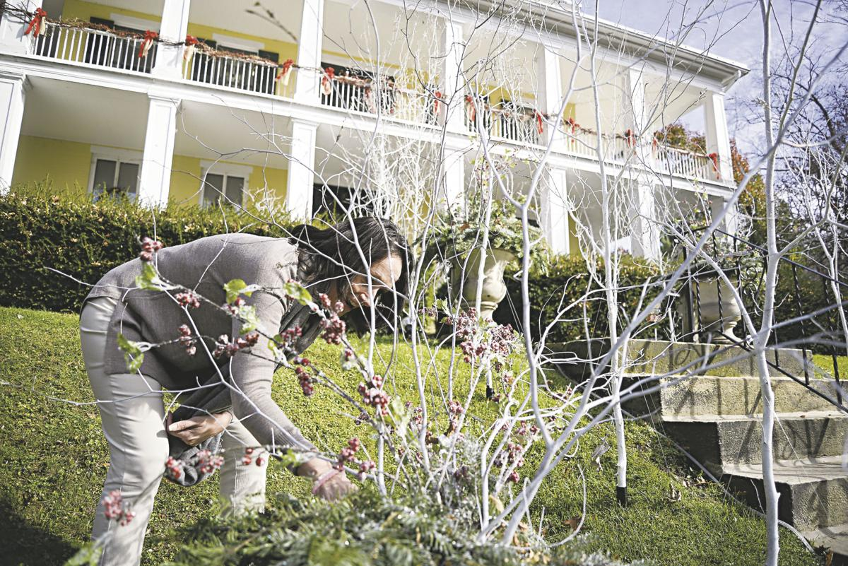 Trees of Christmas, Christmas Tree Lane open this weekend | Local
