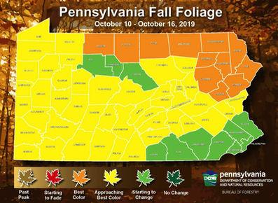 Week 3 fall foliage report