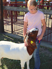 Medina County Fair News