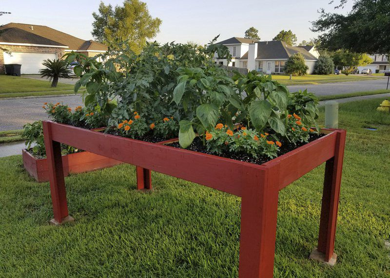 Back-saving salad tables grow vegetables, flowers