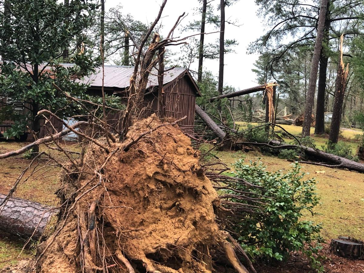 Toppled tree in Clarke County
