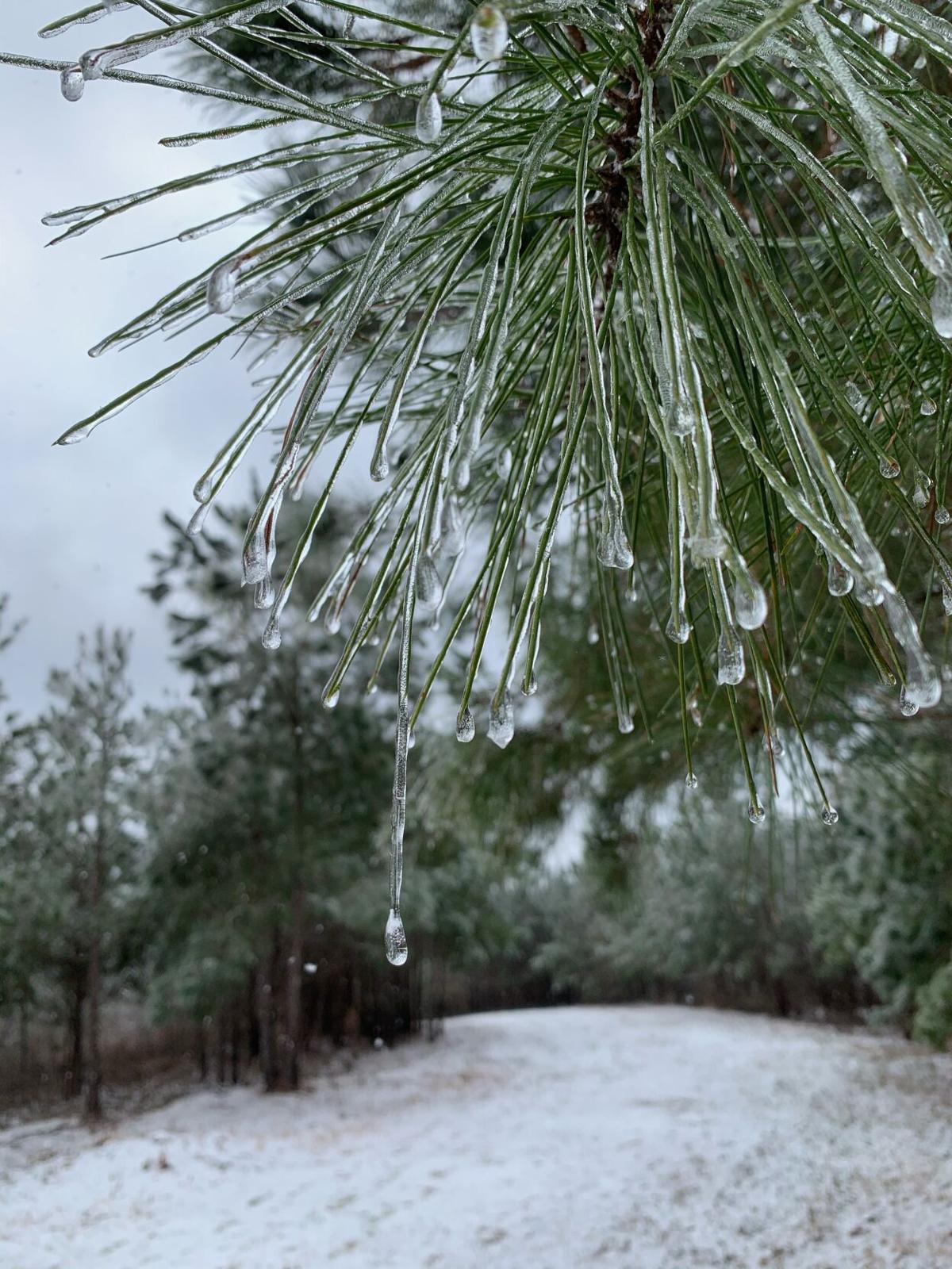 snowpics2.jpeg