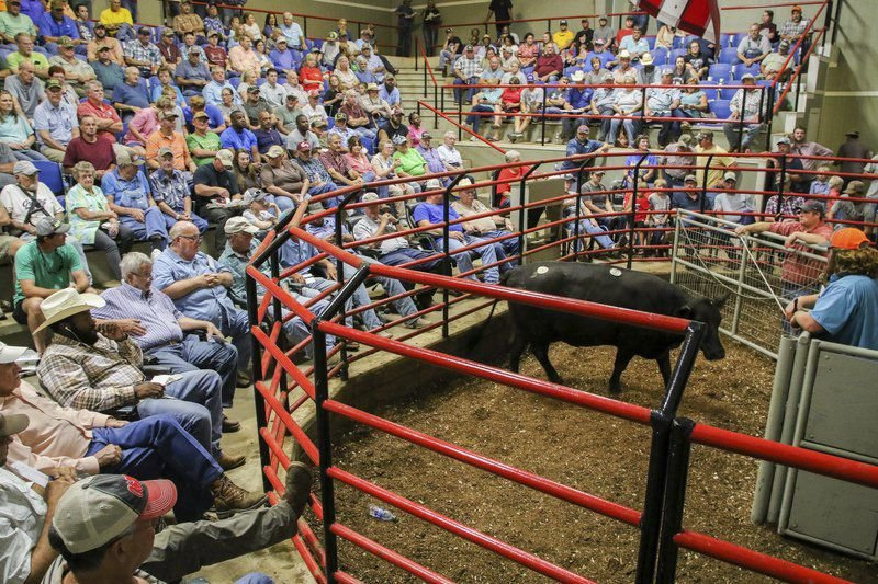 Meridian Stockyard: Selling cattle not just about livestock