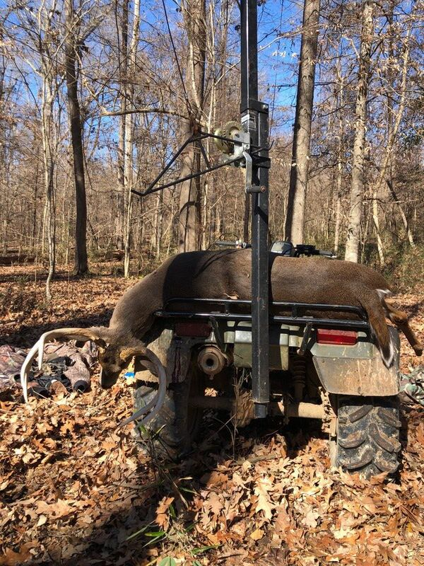 MIKE GILES: Old WMA warrior falls victim to rut