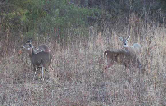 MIKE GILES: Paul Meek's deer scents attract big bucks