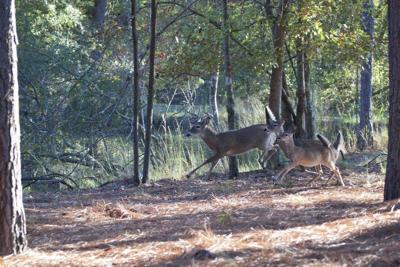 MIKE GILES: Deer hunting memories