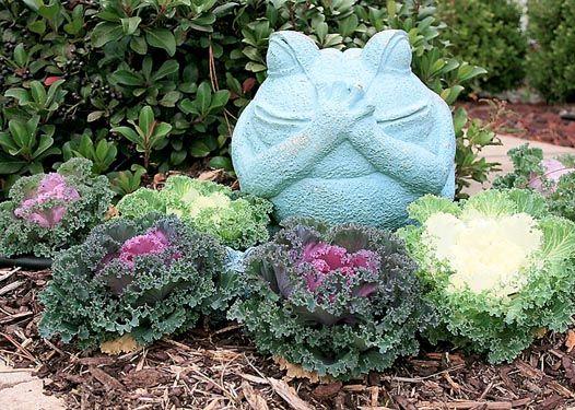 Ornamental cabbage, kale make excellent winter color | Community ...