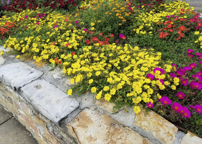 Use flowers that create mats of color in gardens
