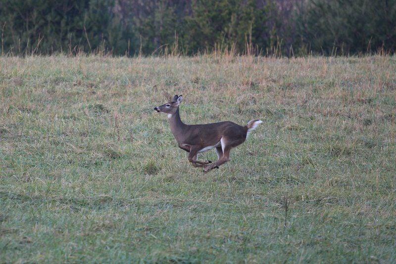 Youth Deer Season Opens Saay
