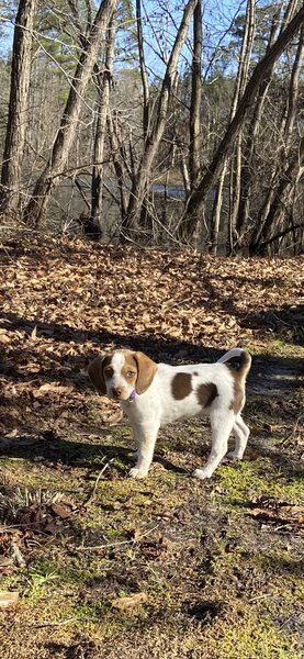 GENA DYE: A beagle named Birdie