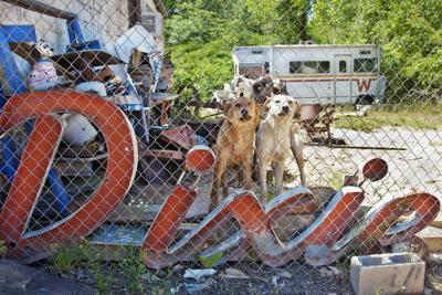 Lucinda Bunnen Dixie Dogs