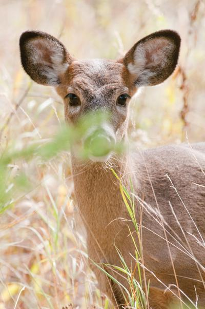 The up and down nature of Minnesota deer hunting