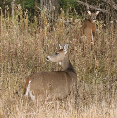 Deer open house Wednesday in Tower