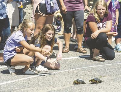 2019 Hoyt Lakes Water Carnival turtle races