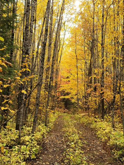 Beautiful fall perfect for grouse hunting