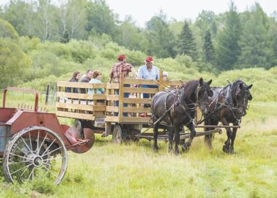 Families enjoy horse drawn wagon rides