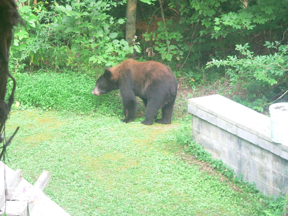 Dunn Church Bear.jpg