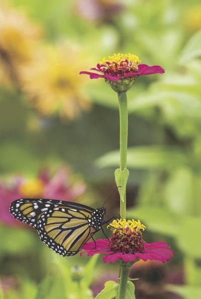 Pollinator picture