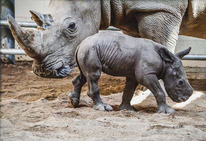 Virginia Zoo Photo 2.jpg