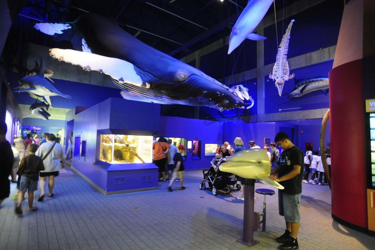 The Virginia Aquarium