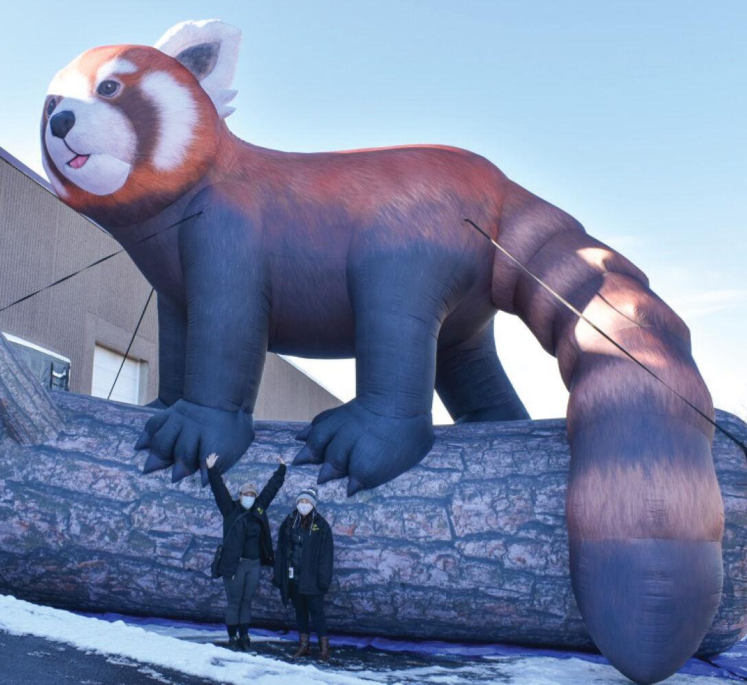 Red Panda2_square.jpg