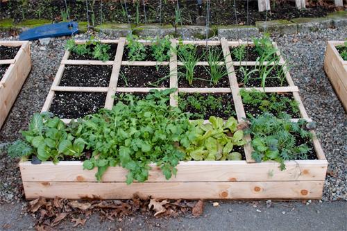 Slmareal outdoor living unveils deluxe do it yourself raised raised garden bed solutioingenieria Gallery
