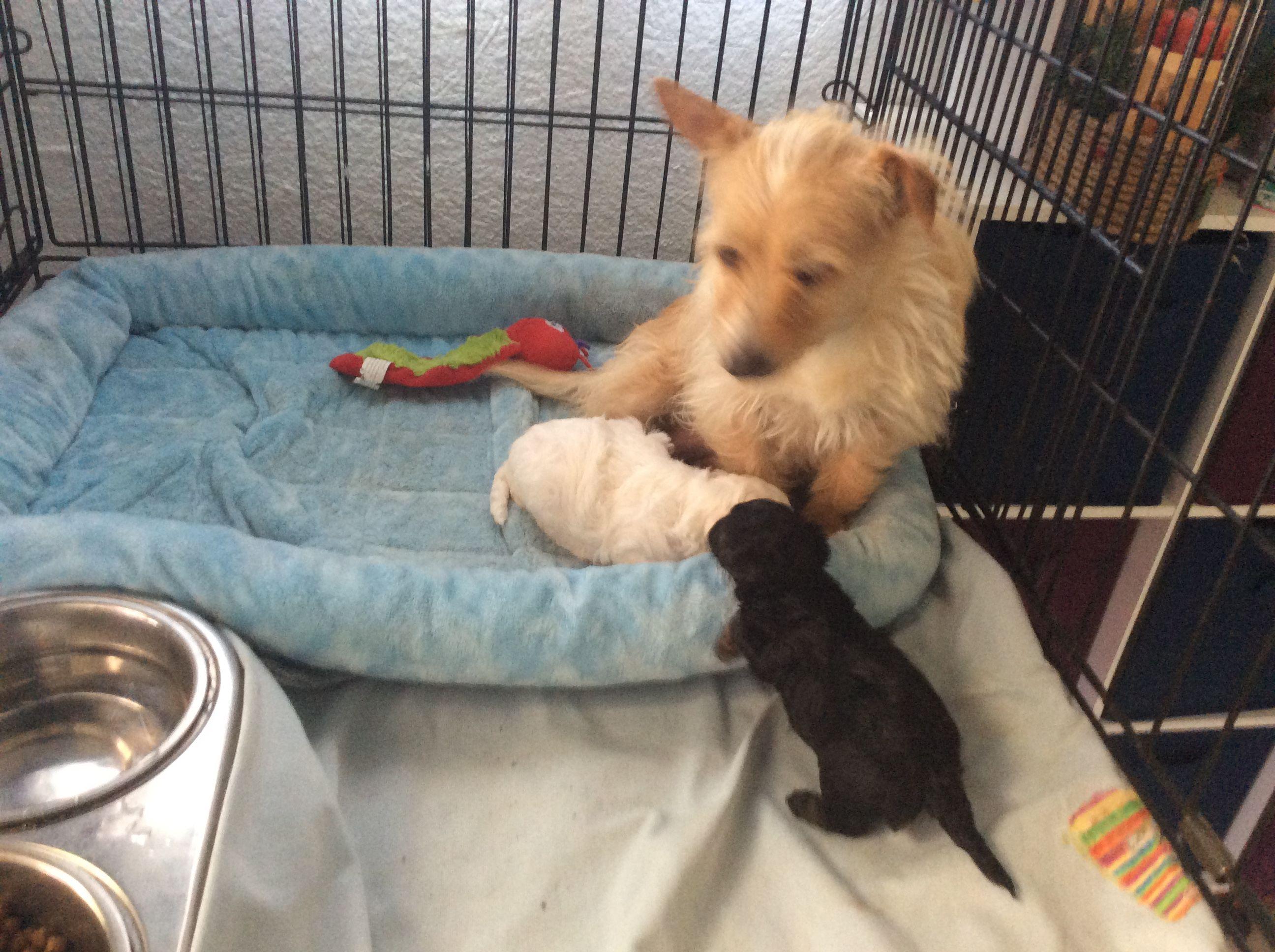 Puppies image 2