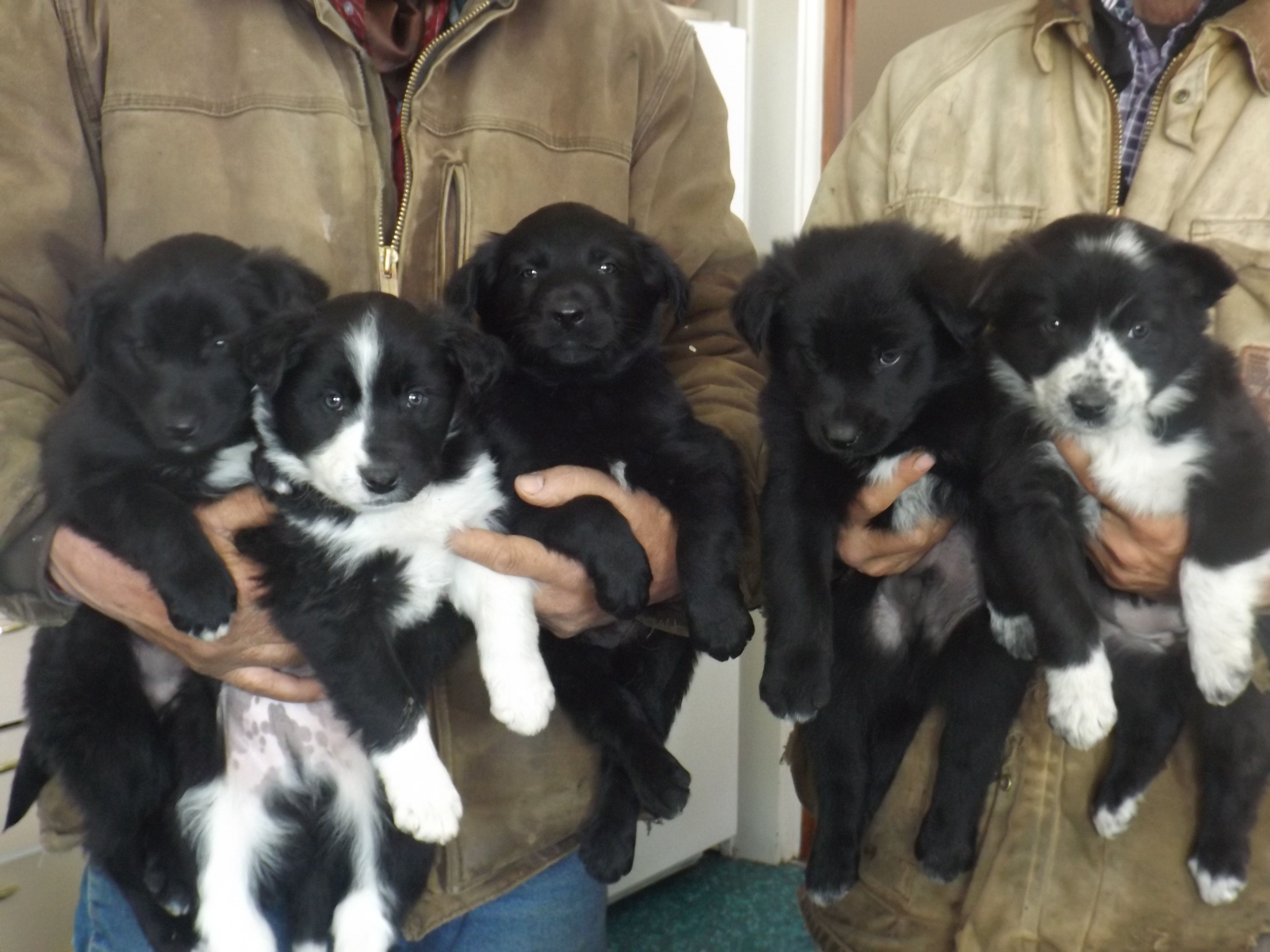puppies image 1