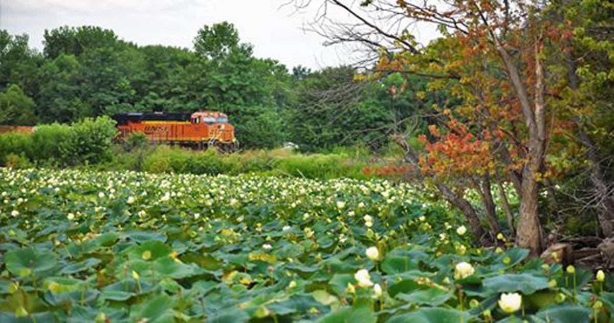 train by lily pads