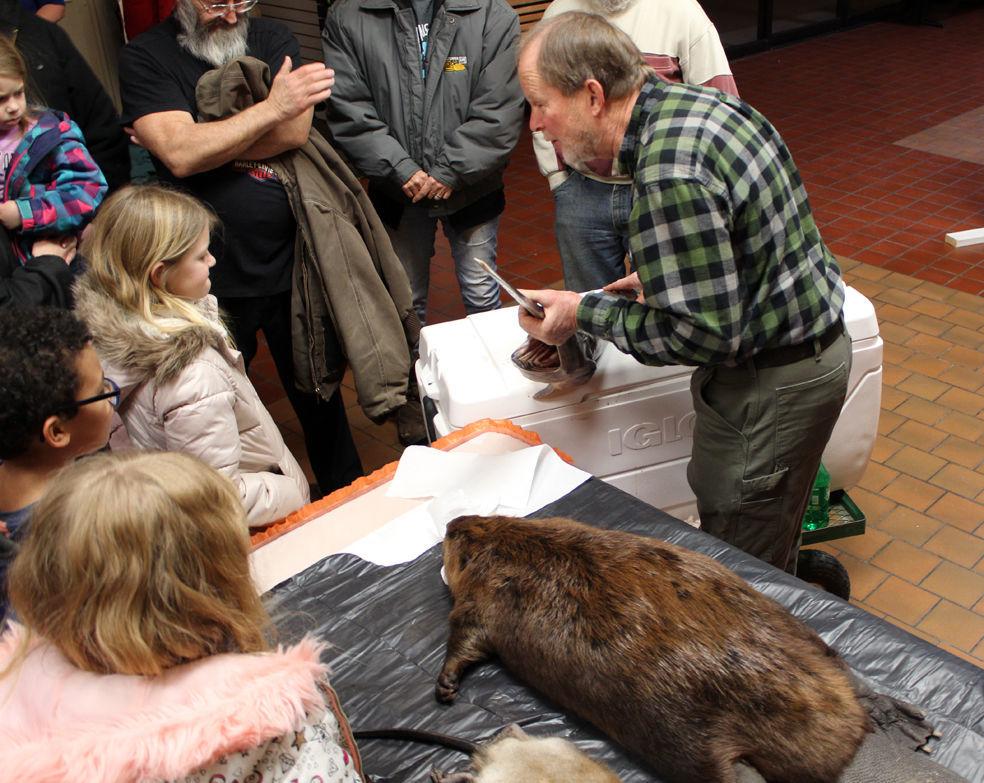 Bald Eagle Days beaver & fish
