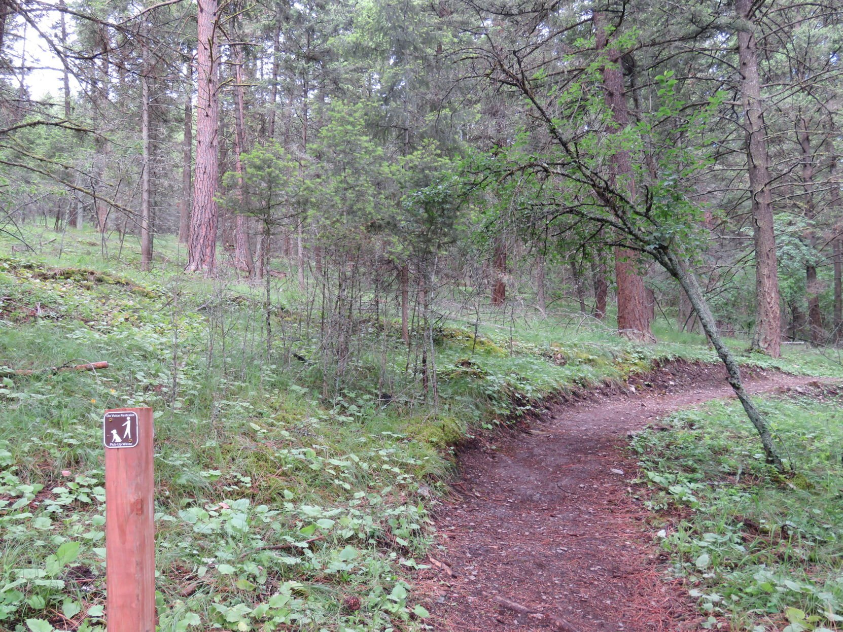 The nature trails behind ghallager centre